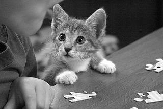 アニマルコミュニケーションを依頼する猫