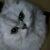 りん さんのプロフィール写真
