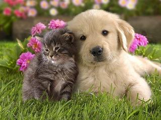 アニマルコミュニケーションをしている犬と猫